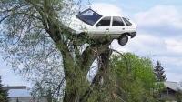 遭遇堵车竟急速倒车上树