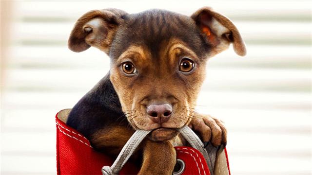 【一条狗的回家路】全新预告 700多个日夜悬命冒险