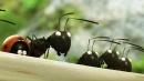 昆虫总动员