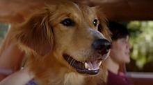评影不离《一条狗的使命》