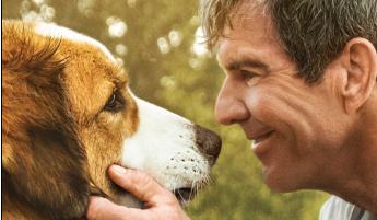 【一条狗的使命2】定档预告片