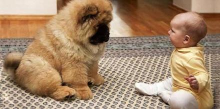 萌娃和狗狗吵架.不料越吵越激烈.接下来的画面看完不许笑